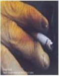 2013 Fiji Addiction - yellowed fingers